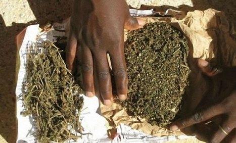 Pour les  besoins d'un baptême, il se métamorphose en dealer de chanvre indien ét écope d'un an ferme