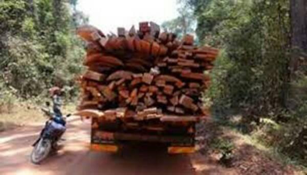 Coupe illicite de bois : Un proche du Maire de Dialambéré arrêté