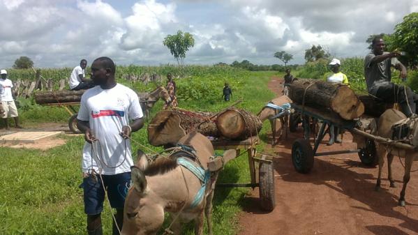 L'Ofnac signale le pillage des ressources naturelles dans les régions du Sud