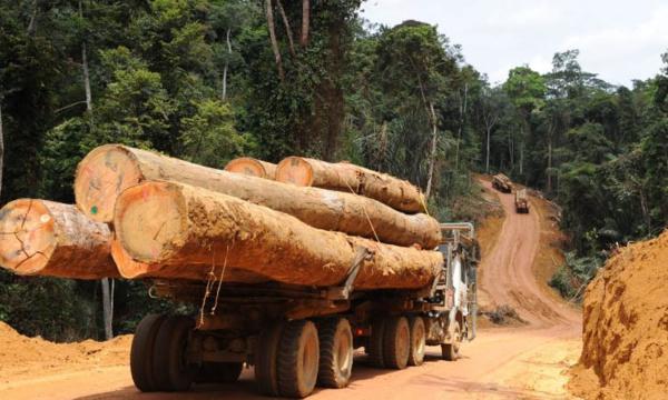 Tuerie de Bofa : la piste du bois se précise...