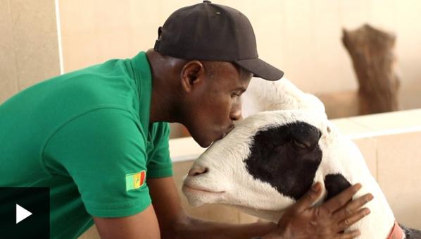 Elevage : 'J'aime le mouton comme j'aime ma famille'