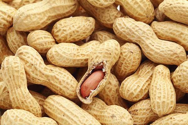 Campagne de commercialisation de l'arachide : l'Eat suspecté de vouloir suspendre la subvention de 22 milliards FCFA