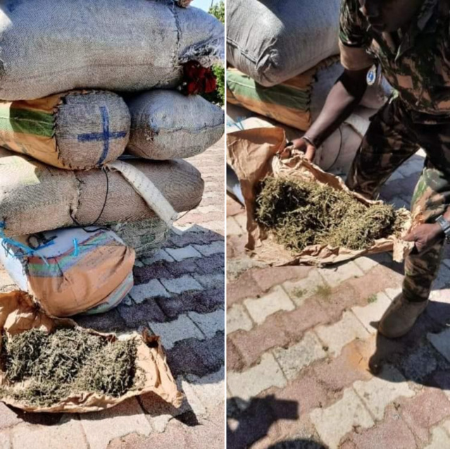 COMPAGNIE DE FATICK/TRAFIC DE CHANVRE INDIEN: La gendarmerie saisit 263 kilos sur deux charrettes