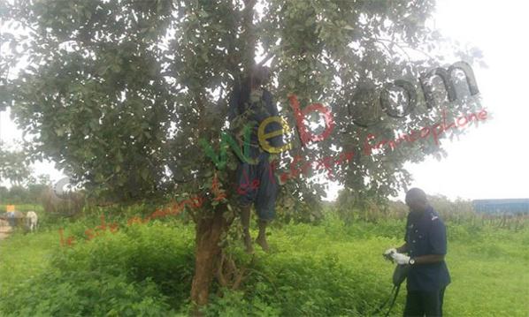 Goudiry : Un homme retrouvé pendu à un arbre (photo)