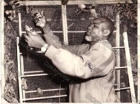Voici le milliardaire  El hadji Diallo Pithi