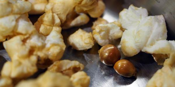 La question de la semaine : pourquoi le maïs éclate quand on le chauffe ?