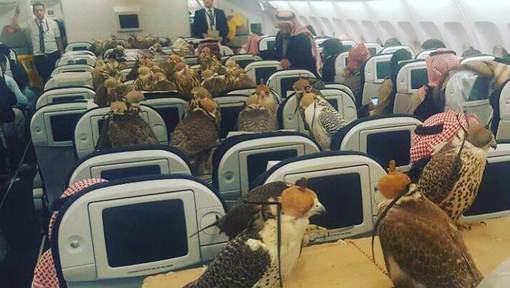 Une prince saoudien réserve des places d'avion pour ses 80 faucons
