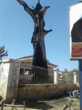 Urgent – Un arbre prend feu depuis 4 jours à Kaolack
