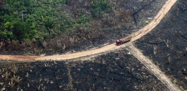 Déforestation : 12 millions d'hectares de forêts tropicales perdus en 2019 (rapport)
