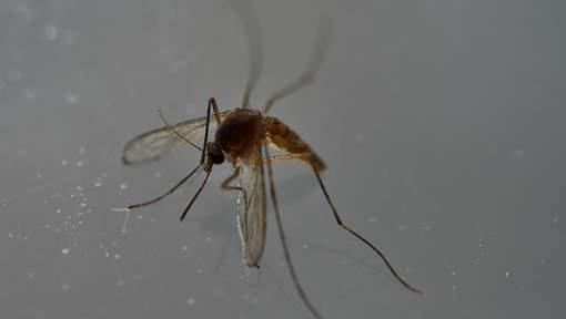 Naissance du premier bébé en Europe atteint de microcéphalie due au virus Zika