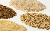 Les producteurs de semences de riz se dotent d'un mécanisme de financement