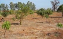 Pour 10 000 hectares attribués au Maroc : le Fouta crie au scandale et menace…