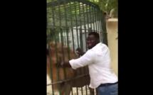 Eumeu Sene entrain de caresser le lion du parc de hann