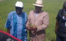 Mévente de la production : les obstacles à l'autosuffisance en riz