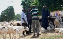Tabaski: des faux billets remis aux vendeurs de moutons…