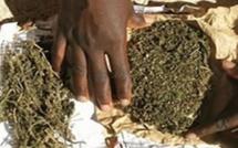 Sédhiou : Saisie de 72 kg de chanvre indien, 2 individus arrêtés