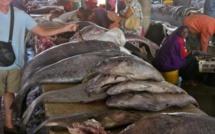 Distribution du poisson : les mareyeurs annoncent une grève le 15 janvier prochain