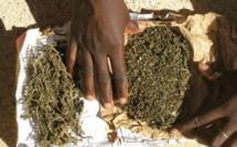Saisie de 300 kg de chanvre indien à la gare routière des baux maraichers dans un bus en provenance du Mali