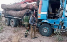 Trafic de bois- Deux camions Gambiens arrêtés