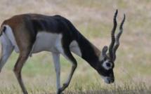 """""""3 des 6 gazelles convoyées à la réserve privée d'Abdou Karim Sall sont mortes"""" (Libération)"""