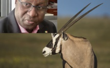 Transfert Des Oryx : Les SALL Aveux D'Abdou Karim