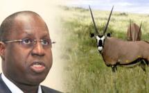 Affaire des « gazelles d'Abdou Karim Sall »: Les journalistes convoqués à la DIC libérés