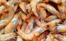 Chine : Le coronavirus découvert sur des emballages de fruits de mer (autorité)